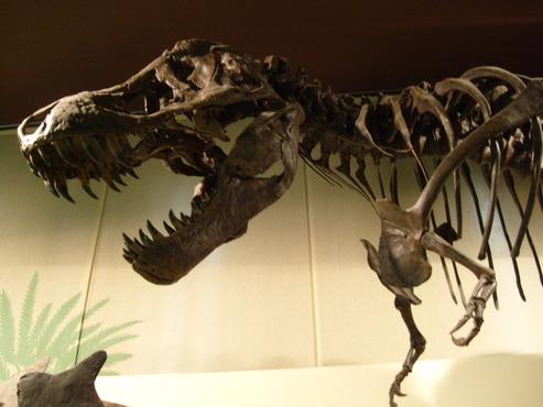 Stan al museo di Storia Naturale di Milano