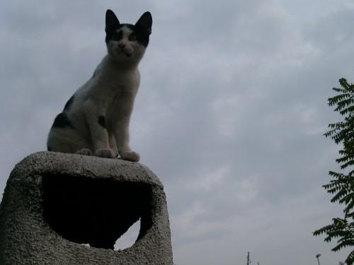 Il mio Gatto 'Scaccabarozzo'!