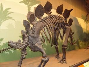 Lo stegosauro al museo di Storia Naturale di Milano