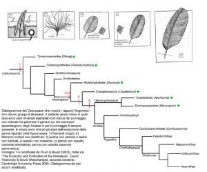 cladogramma_celurosauri