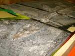 posizionamento del fossile 2