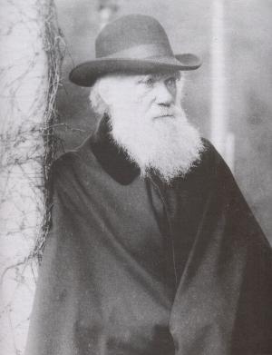 C .Darwin