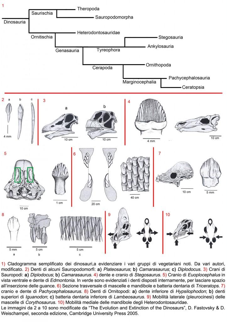 Denti dei dinosauri  erbivori (ingrandisci)