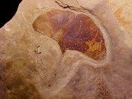 clicca per visitare la pagina di www.fossilmuseum.net