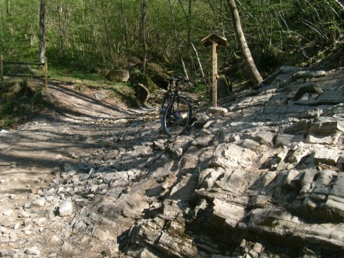 Esplorazione Geo-Paleontologica - Rio Ponticelli (Monte San Giorgio, VA)