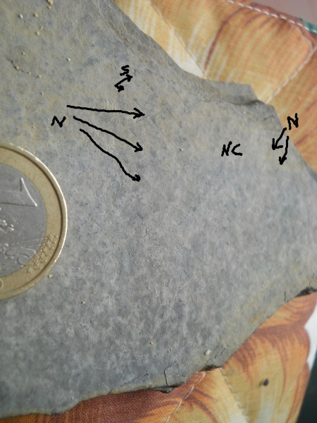 finto fossile di foglia