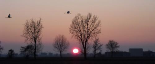 Ibis e tramonto