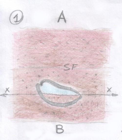 strutture-geopetali-1