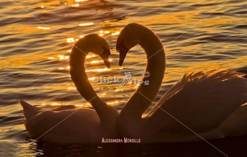 Cuore. ...di Alessandra Morgillo