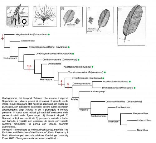 Cladogramma Celurosauri aggiornato - autori vari