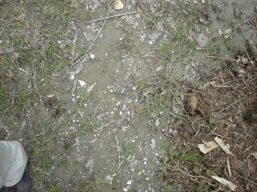 Fossili della cava di San Lazzaro - Foto di Daniele Tona
