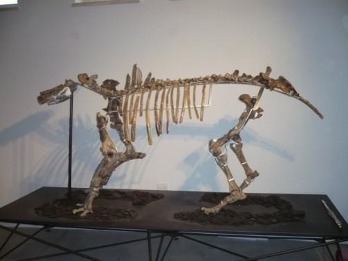 Rinoceronte al museo di Pietrafitta - Foto di Daniele Tona