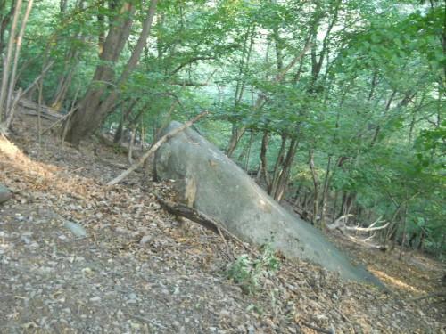 Grosso masso erratico di Gnaiss - Il bastone appoggiato è lungo circa un metro