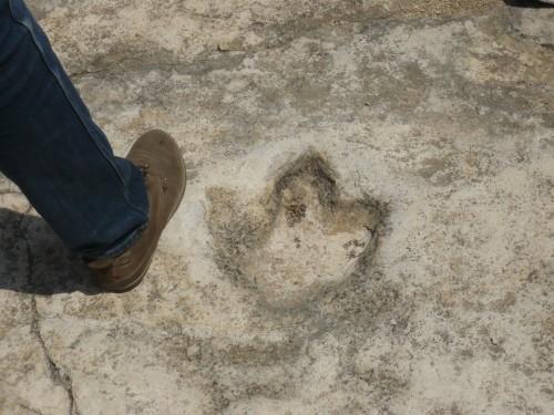 Impronta di dinosauro a Cava San Leonardo