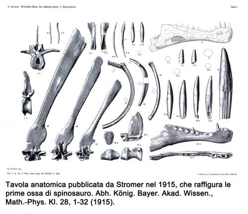 Spinosauro - Stromer 1915