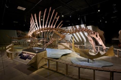 Lo scheletro completo di Spinosaurus nell'allestimento a Washington.