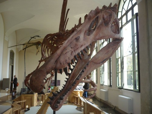Primo piano del cranio dello scheletro nell'allestimento a Palazzo Dugnani